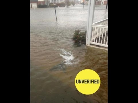 Hurricane Sandy and Shark in the street photos real or fake
